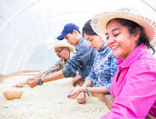 Recognizing the Need for Healthy Coffee Farms